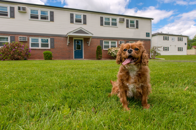 Pet Friendly Community! - Aspen Chase -  All-Inclusive Apartments Minutes From Campus! Join Our Waitlist for Summer/Fall 2021!