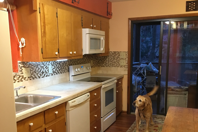 Kitchen with house dog, Mackey - SHARE HOUSE NEAR DUKE; PRIVATE ROOM AND BATH Rental